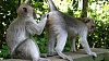 bragazeta-ru-monkey-3-alex-kedato-via-sxc-e1574689416805-1024x576.jpg